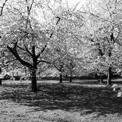 hekken-boomgaardfoto