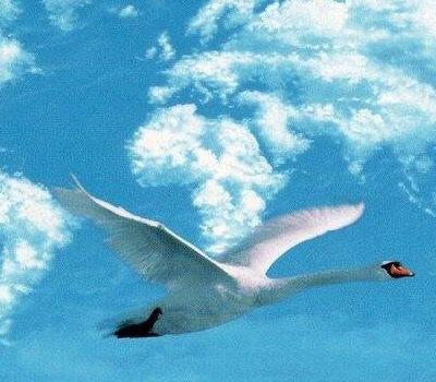gans-in-de-lucht-wolken-vliegen