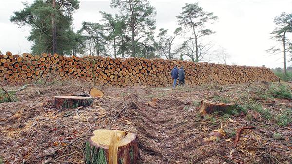 elaster-bossenkap-nederland